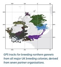 GPS map of Gannets