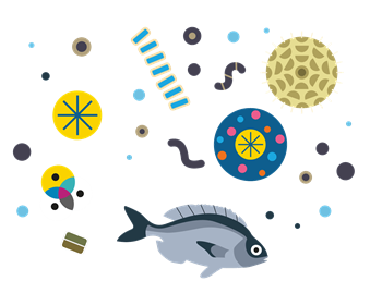 Fish and plankton in illustration