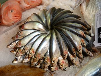 Caught sprat fish arranged in a circle at a fish market